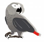 African Grey.Eps
