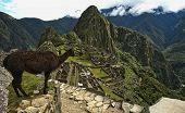 Machu Picchu, Peru, with Llama