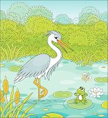 Big Grey And White Heron And A Small Green Frog On A Blue Lake Among Cane, Grass And Bushes Of A Sum poster