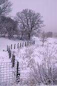 Fence Snaking Towards Tree in Winter Landscape