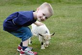 foto of pygmy goat  - A cute young boy stroking a cute young pygmy goat