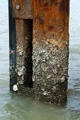 Barnacle Adhesion On Steel Poles With Rust.