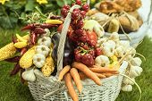 Farmers Hand Holding A Basket With Seasonal Products, Wooden Basket Full With Autumnal Products, Agr poster