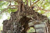 Banyan Trees On Ruins