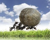 stock photo of ant  - teamwork  - JPG