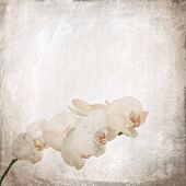 Textured Old Paper Background With White And Magenta Phalaenopsis Orchid