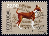 Postage Stamp Portugal 1981 Podengo, Breed Of Dog From Portugal