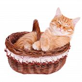 Crafty cat is in the basket