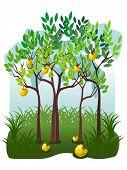 Juicy Fruits In The Apple Garden