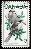 Briefmarke Kanada 1968 grau Yay, Vogel