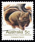 Postage Stamp Australia 1981 Queensland Hairy-nosed Wombat