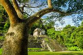 Palenque Tree And Temple