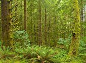 Northwest Rain Forest