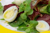 Greens Salad