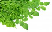 image of moringa  - Edible moringa leaves close up over white background - JPG