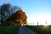Path Leading Uphill To Sunlit Autumn Trees At Sundown
