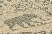 Mosaic With An Elephant In Volubilis, Morocco