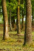 pic of suny  - Beautiful green forest with oak trees at  a suny day - JPG