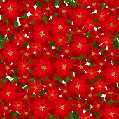 Christmas seamless background with red poinsettia flowers. Vector illustration.
