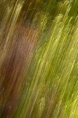 stock photo of baste  - background image with the optical impression of coated bast or straw - JPG