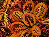 Close-up of colored patterns in beautiful autumn l