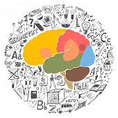Doodle set & brain sections