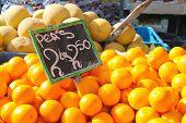 Sale Of Citrus On The Dutch Market