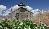 Barn In Field With Flowers