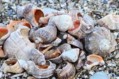 Lots Of Colorful Shells And Coral On The Sand.