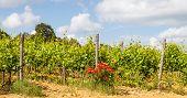 Tuscany Wineyard
