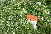 stock photo of dump  - Toilet bowl with wooden toilet seat and lid dumped in th wild flowers and plants of a nature area - JPG
