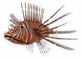 image of saltwater fish  - 3D digital render of a Pterois or lionfish a genus of venomous marine fish from the Indo - JPG