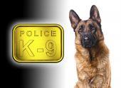 German Shepard K9 Police