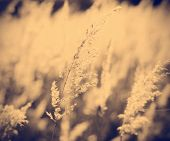 grunge background of feather grass against sun