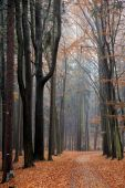stock photo of fall trees  - Autumn road in forest Czech Paradise - JPG