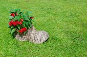 foto of begonias  - decorative shoe shape flower pot with red flowering begonias on grass - JPG