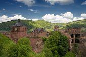 Ruins Of Castle Heidelberg In Spring