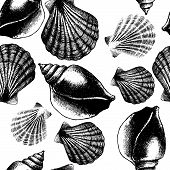 Hand drawn seamless pattern with sea shell