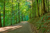 stock photo of pieniny  - Trekking trail by green forest - JPG