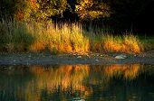 Grassy Creek Shore