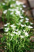 Little spring flowers, outdoors