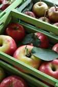 Juicy apples in boxes, close-up