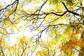 Beautiful autumn tree twigs