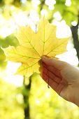 Beautiful autumn leaf in hand