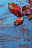 Dark red leaves on blue wooden background