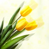 Beautiful tulips on light background