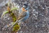 stock photo of canaima  - Small bird on plateau of Roraima tepui - Venezuela South America ** Note: Visible grain at 100%, best at smaller sizes - JPG