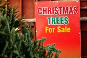 Fresh balsam fir Christmas trees for sale.