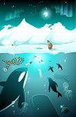 Arctic underwater marine life