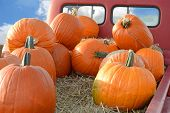 Pumpkins on back of vintage pickup truck